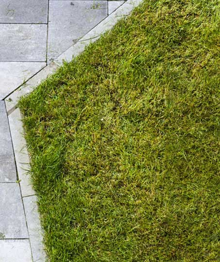 Golden Willow Landscaping Inc. Lawn Dethatching