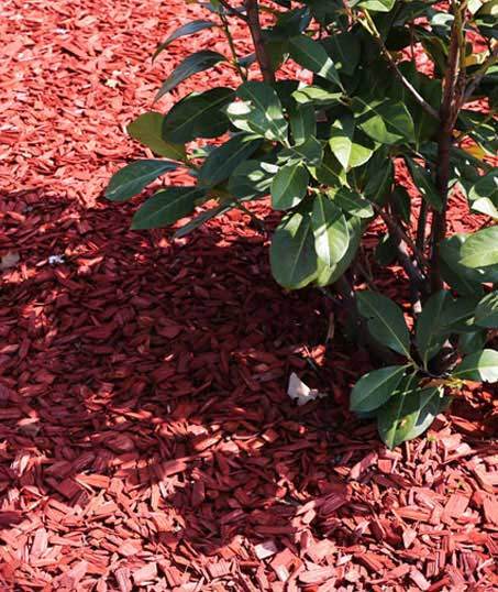Golden Willow Landscaping Inc. Mulching