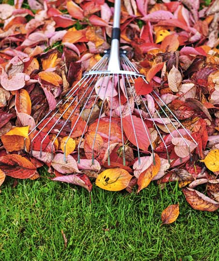 Golden Willow Landscaping Inc. Fall Clean Up